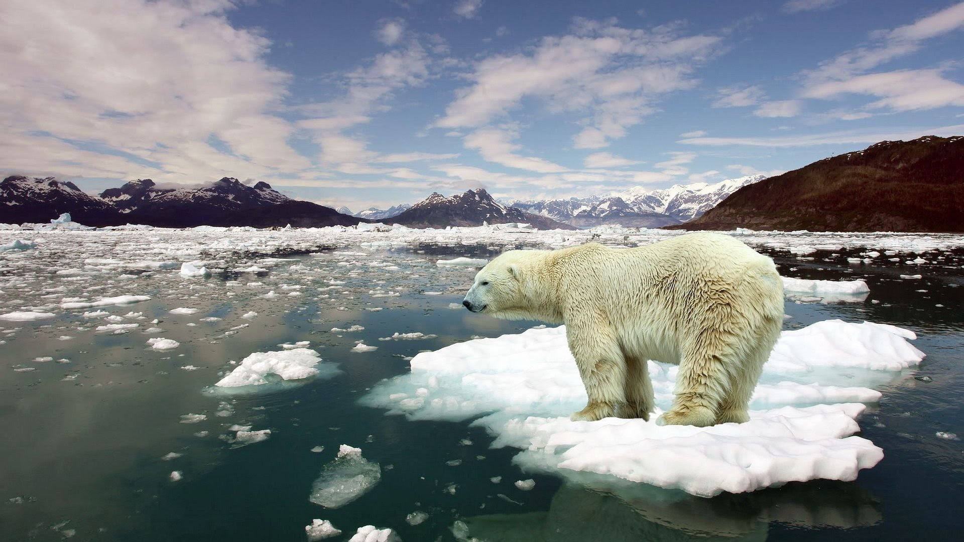 Effects of Global Warming HD IMages